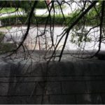 Overhanging tree branches can cause damage to your roof