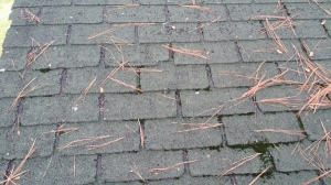 These shingles are past their service life and need to be replaced.